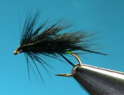 Black Sedge hog