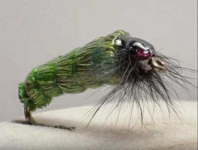 Grass-cased Caddisfly Larva