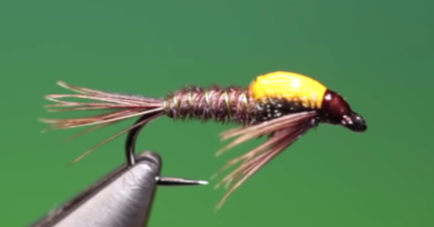 Hot spot pheasant tail