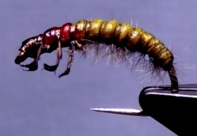 La larve d'hydropsyche
