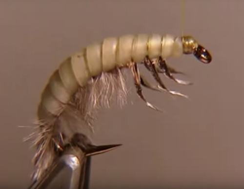 Larvas de caddis