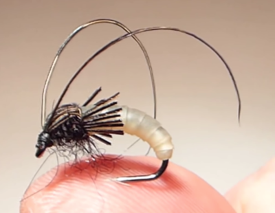 Larve Trichoptère (phrygane)