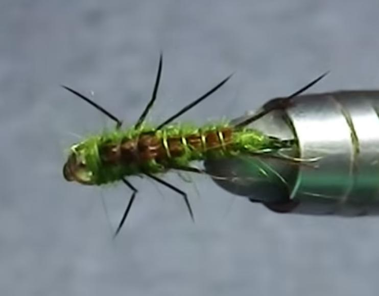 Olive stonefly