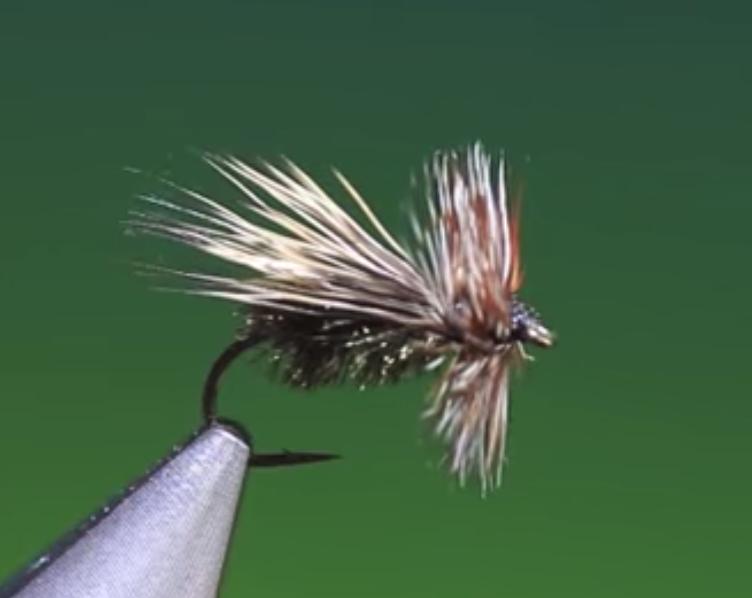 Peacock caddis