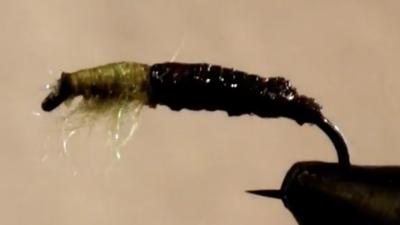 Peeping Tom Cased Caddis Larva