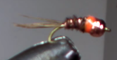 Pheasant tail spot orange