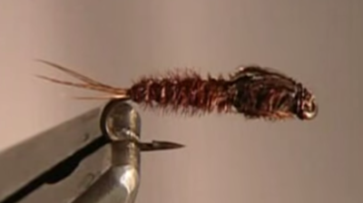 Pheasant Tail originale