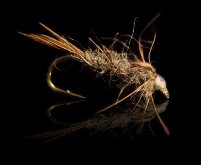 Oreille de lièvre en nymphe