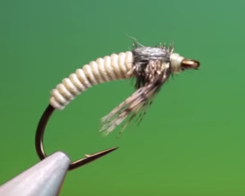 Caddis larva Barry