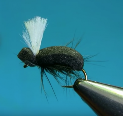 Simple Foam Beetle