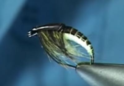 Ammonite Nymph