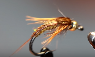 Segmented quill grayling candy